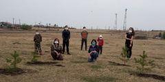 На территории Шарыповского района  идет Всероссийская акция «Сад Памяти»